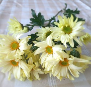 花材スプレーマム